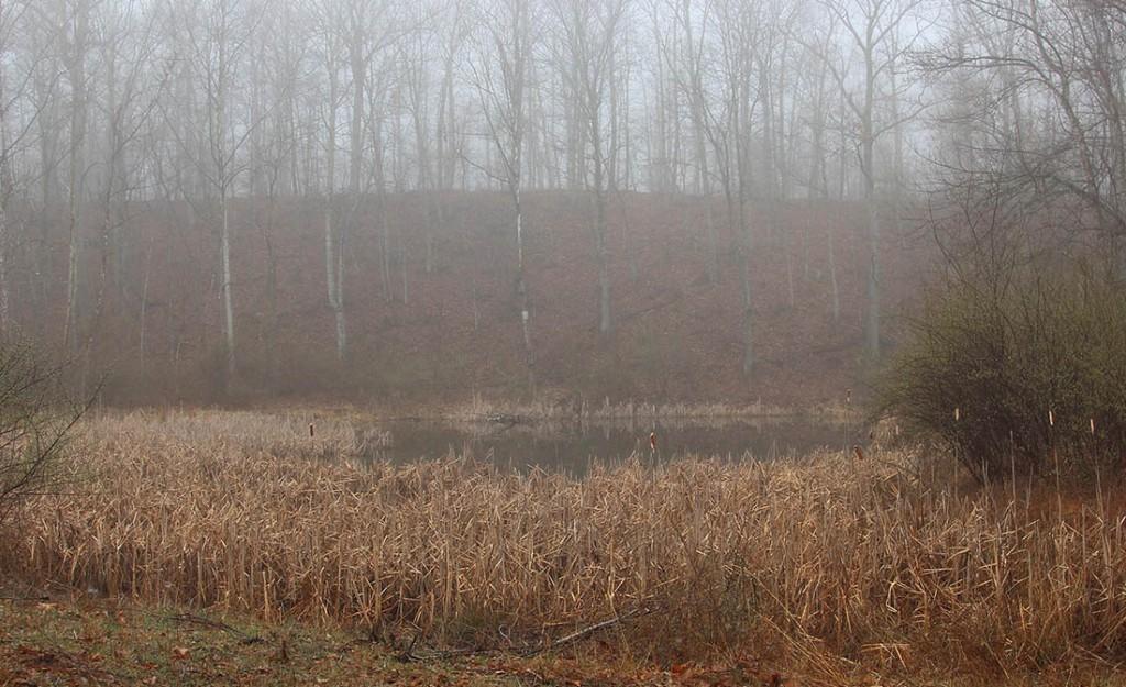 Elliott Mountain Pond © Lang Elliott