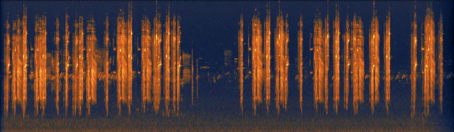 Common Grackle Sonogram