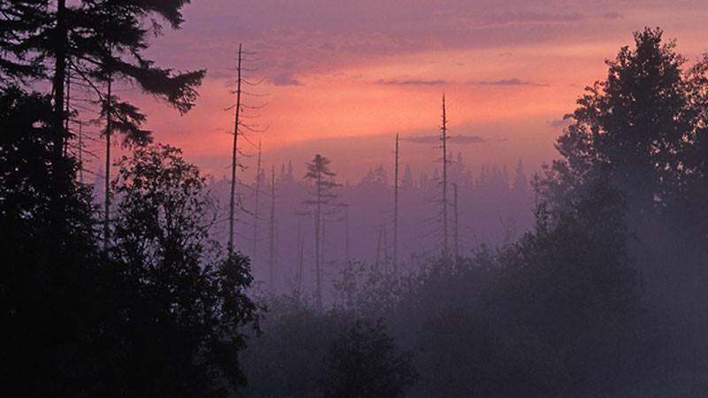 Adirondack Spruce Bog