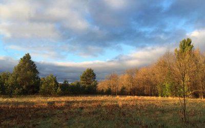 Meadow After Rain