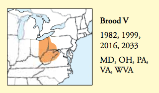 Periodical Cicada Brood V range map