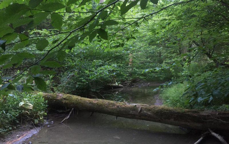 Shindagin Hollow habitat