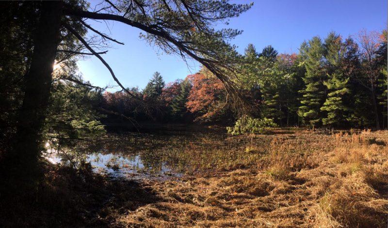 Ladyslipper Pond habitat - by Lang Elliott