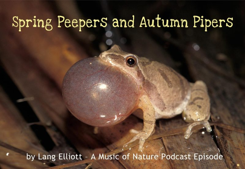 Spring Peepers & Autumn Pipers cover photo