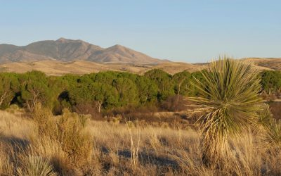 Las Cienegas National Conservation Area