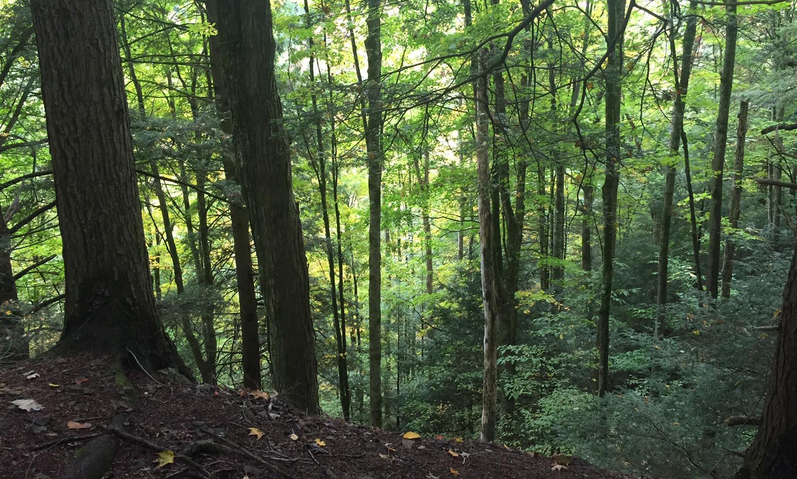 Shindagin Hollow forest scene
