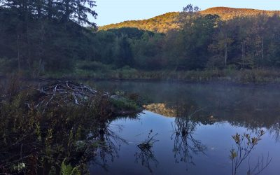 Catskill Beaver Pond