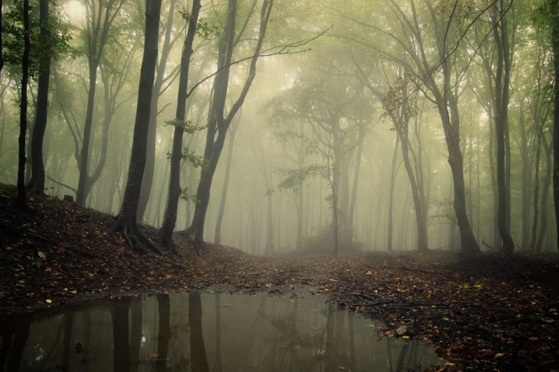 forest fog with pool - shutterstock_63733147