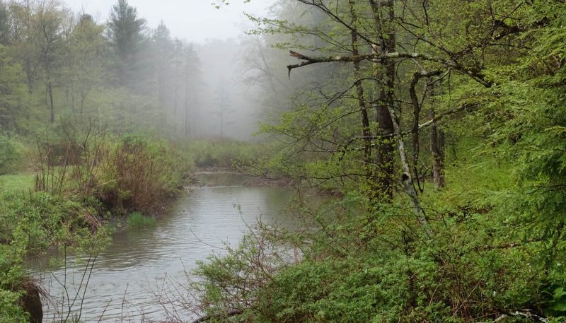 Atmospheric Swamp - track art for album: Birds & Brooks