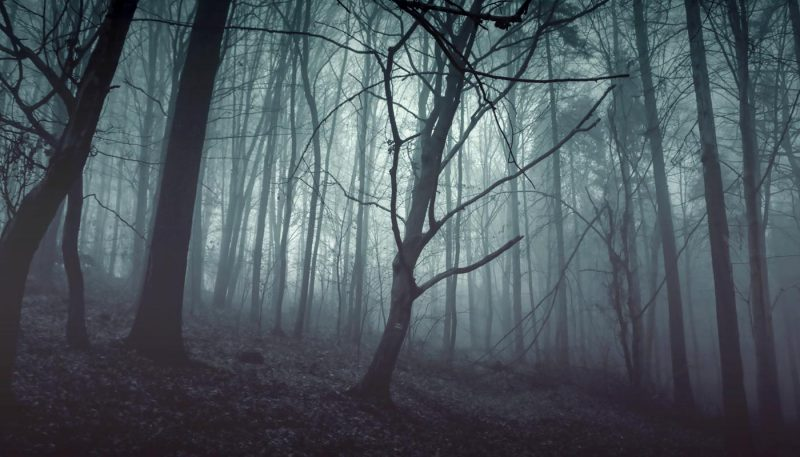 Autumn Nightwind - track art for album: Wind Songs