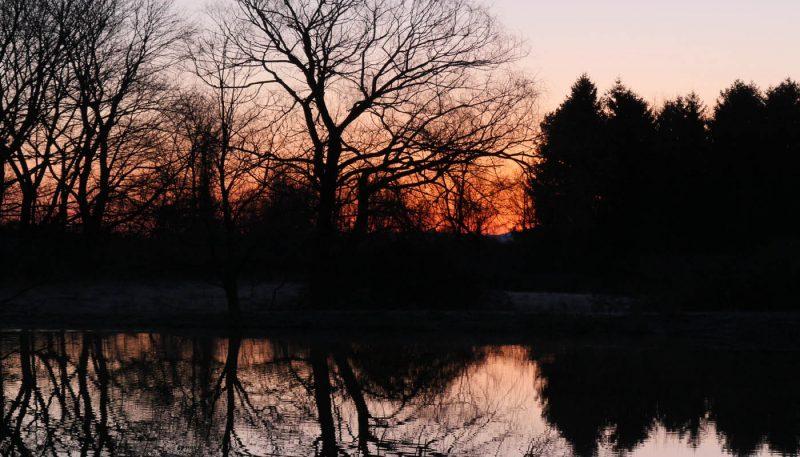 Beaver Pond at Dawn - track art for album: Birds at Dawn