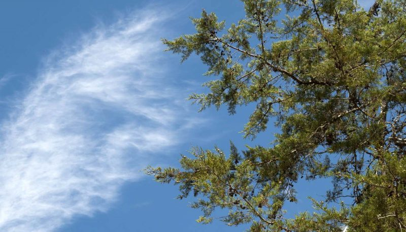 Cicadas, Wind & Waves - track art for album: Wind Songs