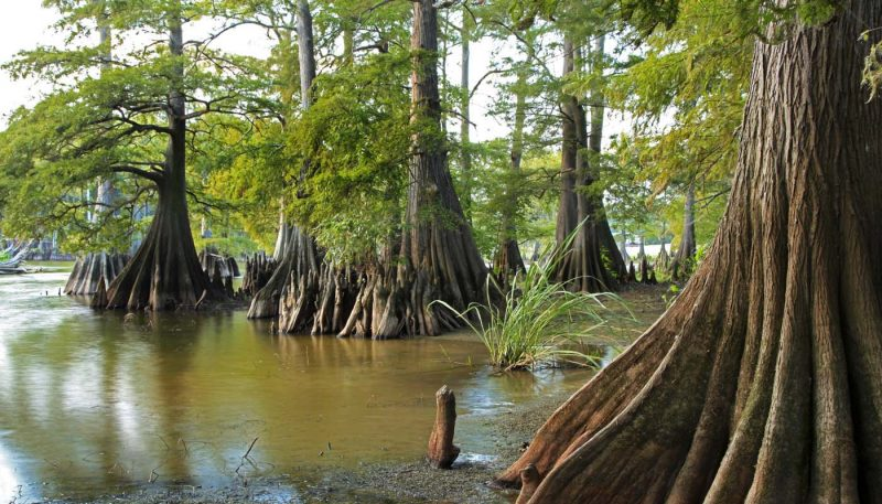 Cypress Water Dance - track art for album: Inland Waters
