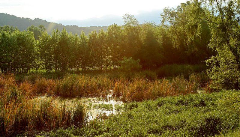 Eagle Bluffs Marsh - track art for album: Birds at Dawn