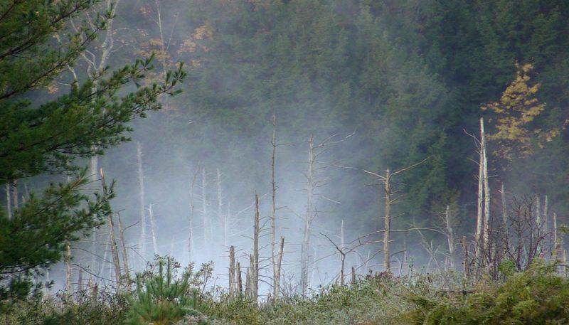 Foggy Bottom - track art for album: Birds at Dawn