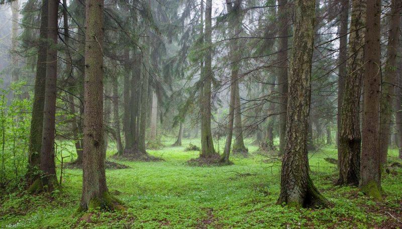 Hemlocks in the Mist - track art for album: Rain Moods