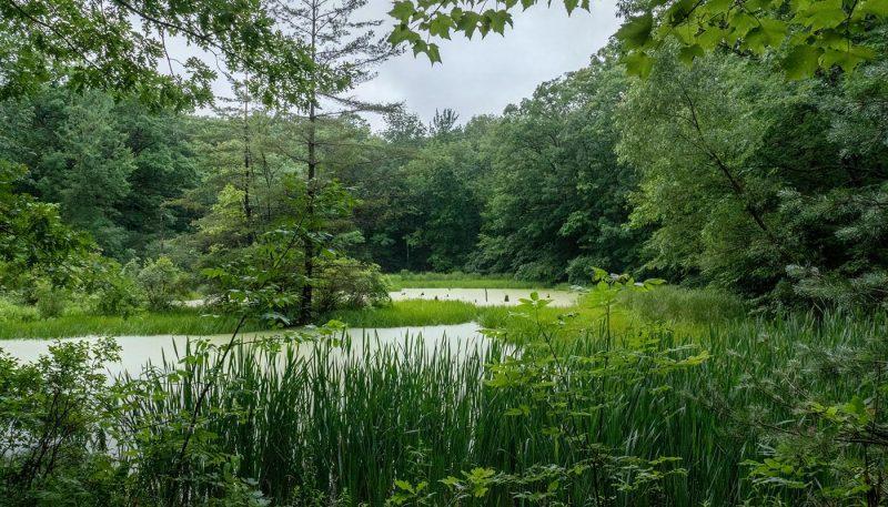 Potomac Swamp - track art for album: Birds at Dawn