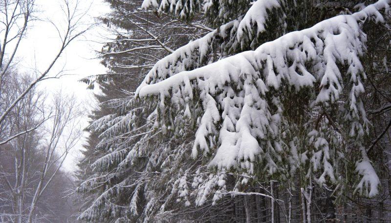 Winter Windstorm - track art for album: Wind Songs