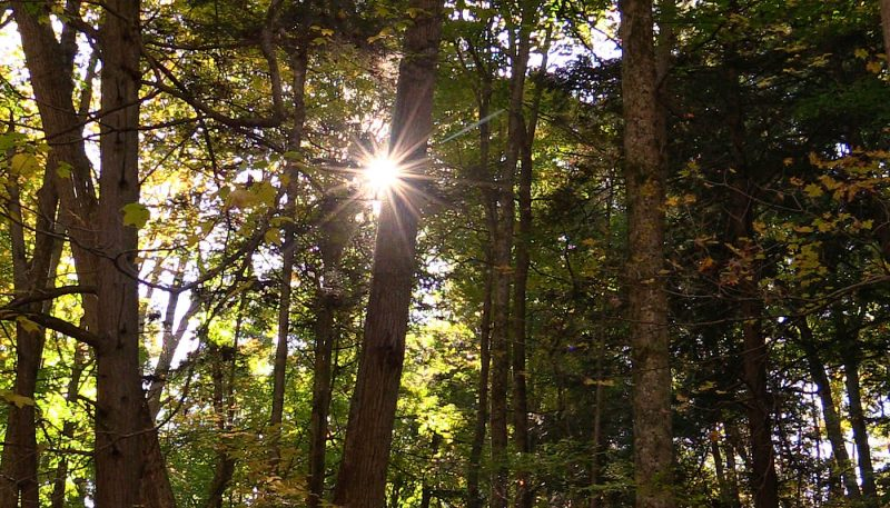 Woodland Medley - track art for album: Birds at Dawn