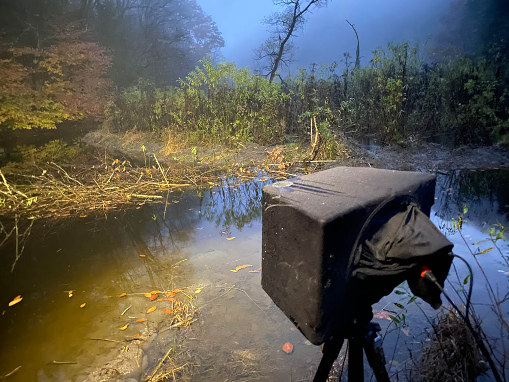 night photo showing soundscape microphone at edge of beaver pond
