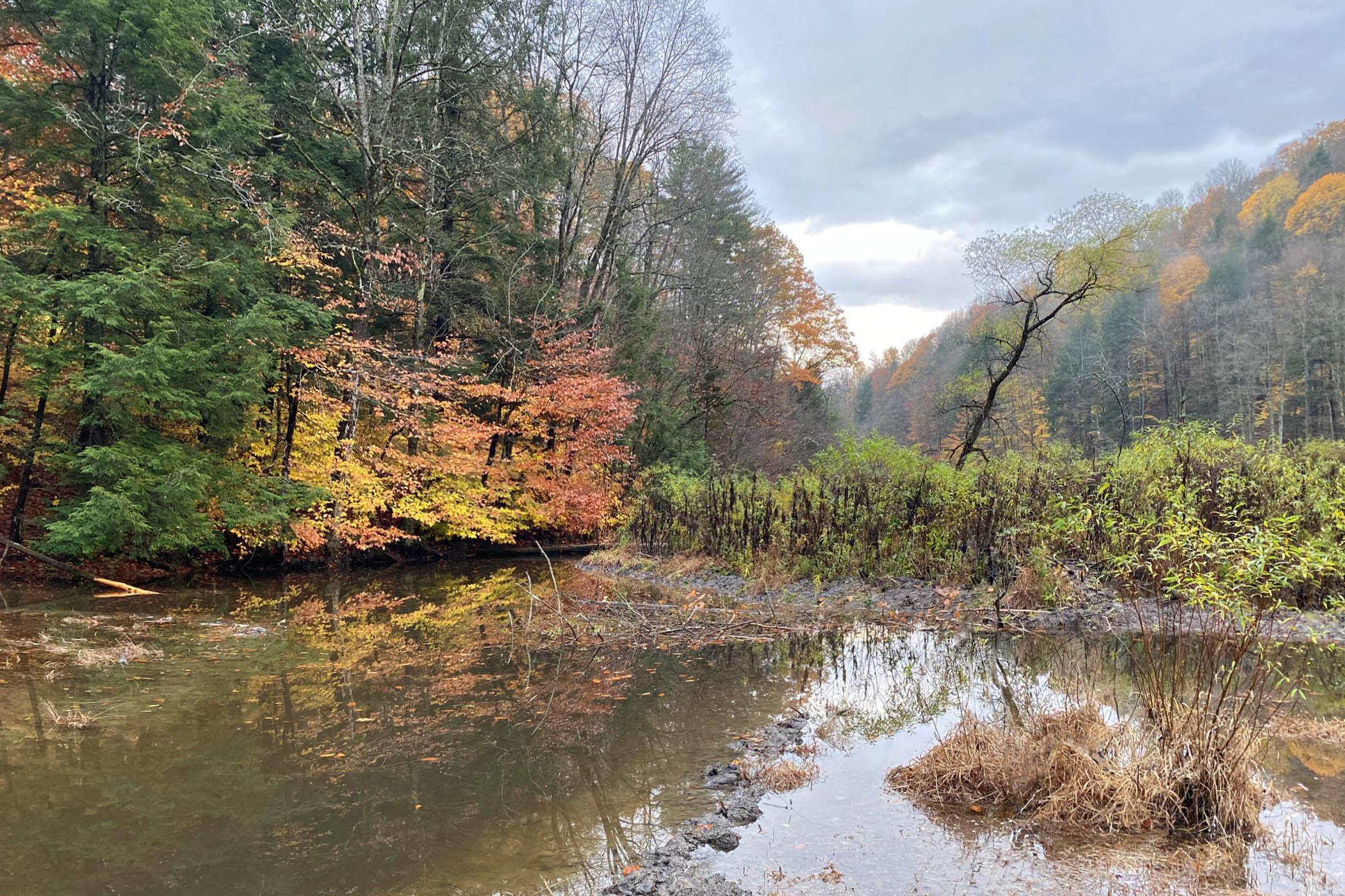 Shindagin Hollow wetland after rain.