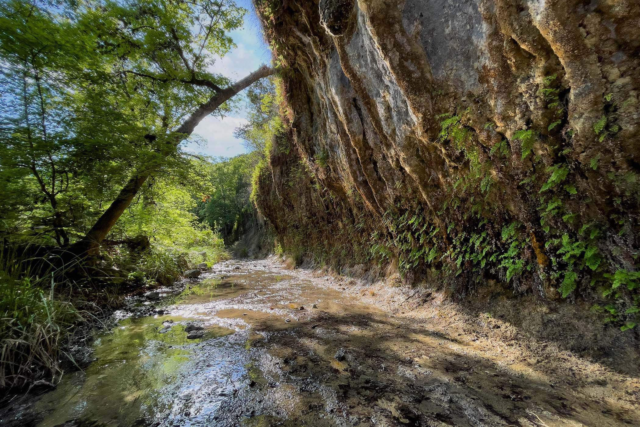 The Grotto - a limestone bluff overhang along a small stream in Lost Maples State Natural Area in the Hill Country of Texas. © Lang Elliott