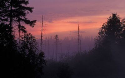 Adirondack Coyote Song