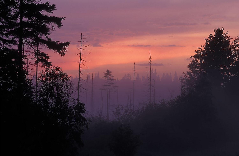 Adirondack spruce bog at dusk © Lang Elliott